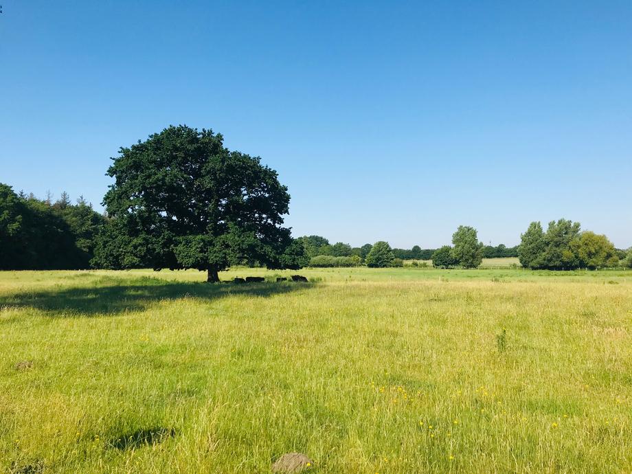 Landschaftliche Umgebung vom Nordkolleg